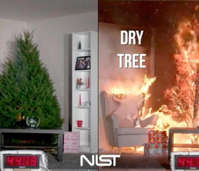 Left shows watered tree not on fire, right shows dry tree on fire.