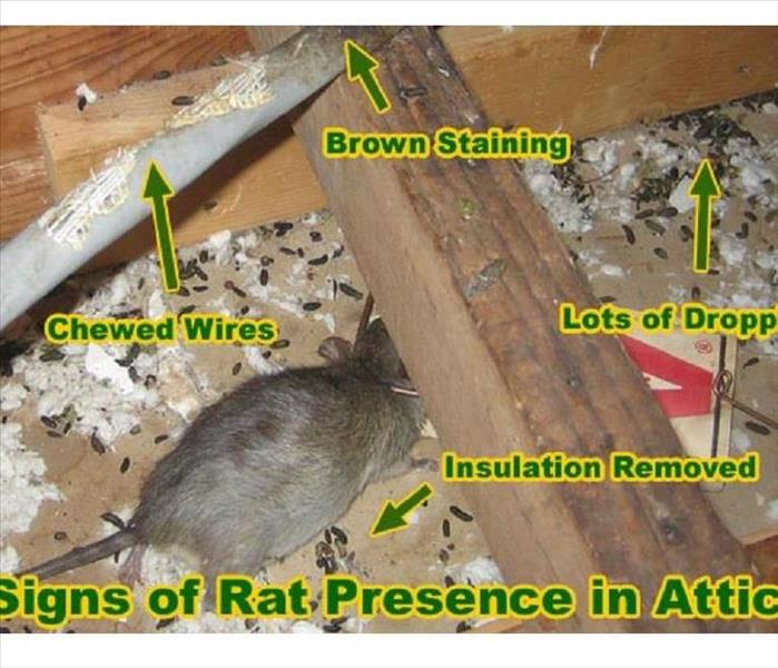 Rodent Infestation Cleanup in Elizabeth City,Outer Banks